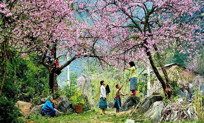 fete-des-fleurs-lai-chau-9020378